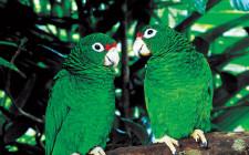 Mơ thấy chim vẹt: Gánh chịu khó khăn và bị lời đơm đặt ra vào