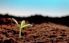 Mơ thấy hạt giống: Sẽ xuất hiện cơ hội mới trong hy vọng của bạn
