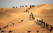 Mơ thấy lạc đà: Sức khắc phục khó khăn
