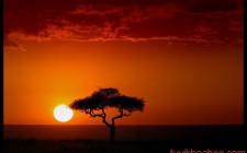 Mơ thấy mặt trời mọc: Có cảm giác dựa dẫm vào cha