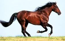 Mơ thấy ngựa: Có liên quan đến bạn bè và tình yêu