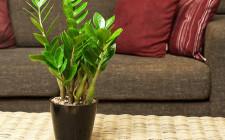 Những lưu ý phong thủy khi trồng cây trong nhà