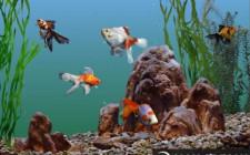 Số lượng và màu sắc của cá
