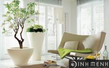 Tầm quan trọng của hoa, cây cảnh trong phòng khách