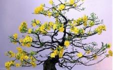 Ý nghĩa phong thủy của cây hoa Mai